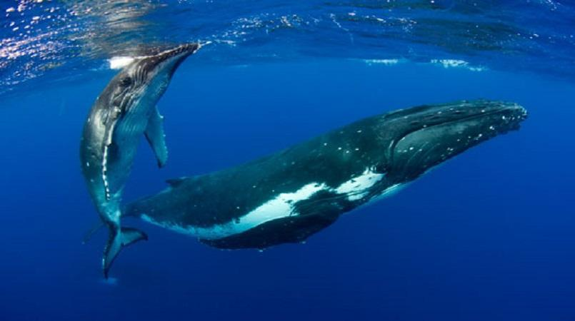 Celebrate World Whale Day