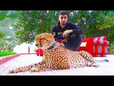 Exotic Pets of Dubai