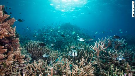 There are coral reefs against the pandemic - but we have a survival guide