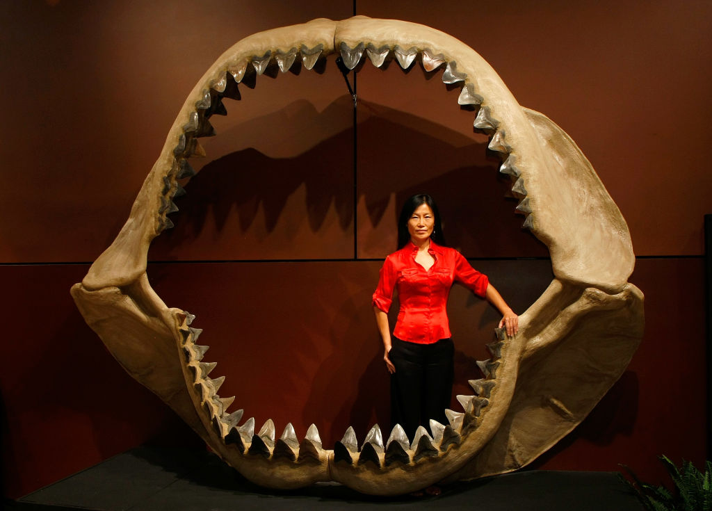 Megalodon Sharks Had Human-Size Babies That Ate Each Other