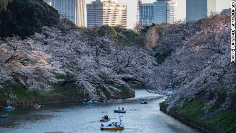 Cherry blossoms are in Kitanomaru Park in Tokyo, Japan, on March 23.