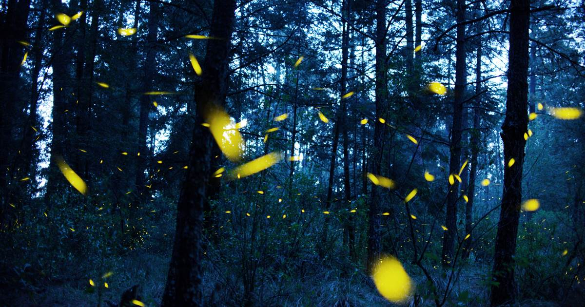 Fireflies don't respond well to light pollution. They're not alone.
