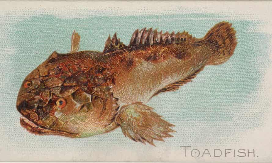 A singing fish
