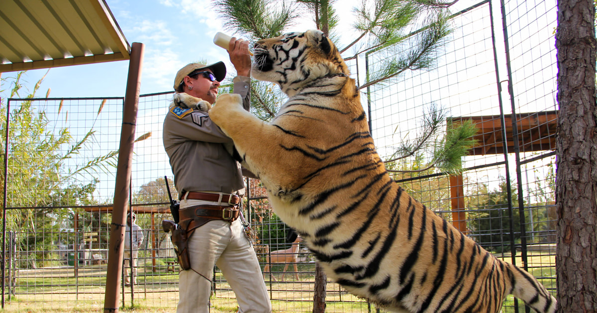 Federal officials remove last of big cats from Tiger King Park
