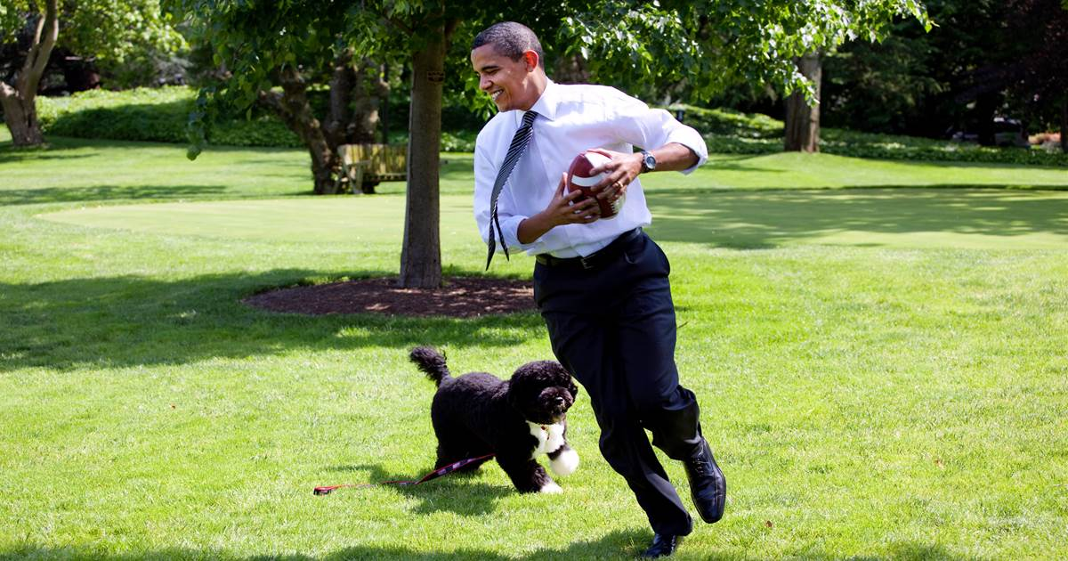 Obama announces death of former 'first dog' Bo