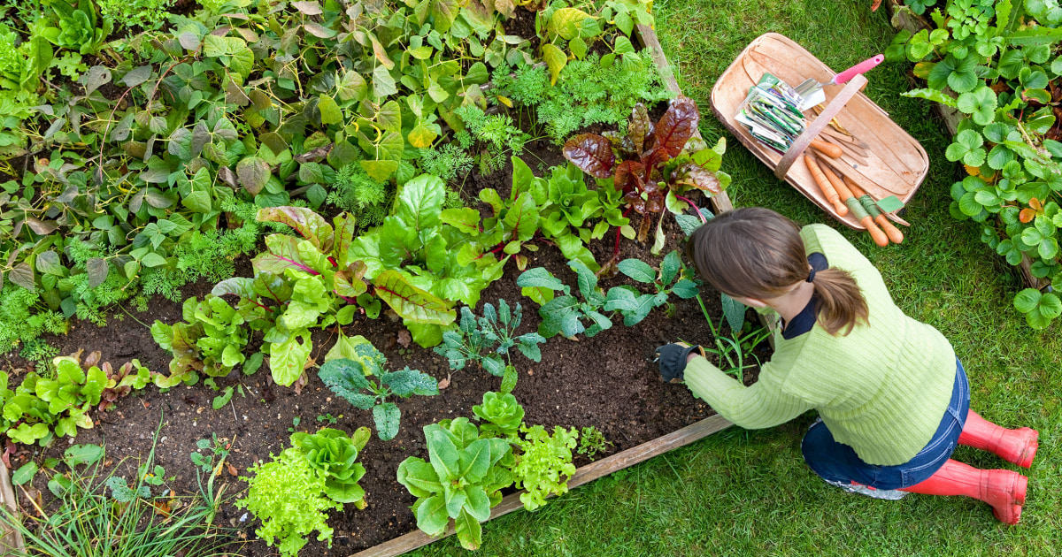 12 best raised garden beds in 2021, according to experts