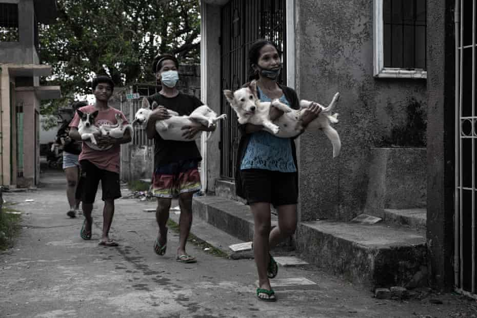 Dogs being carried after surgery