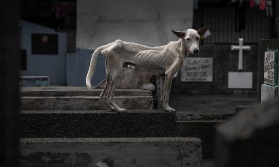 An emaciated dog stands among the tombstones