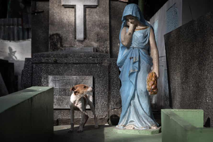 A dog looks at a statue of Mary