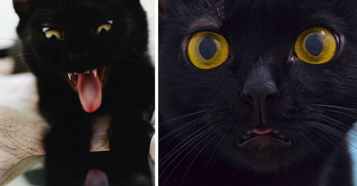 Just How Exactly Did Black Cats Get Their Bad Reputation?