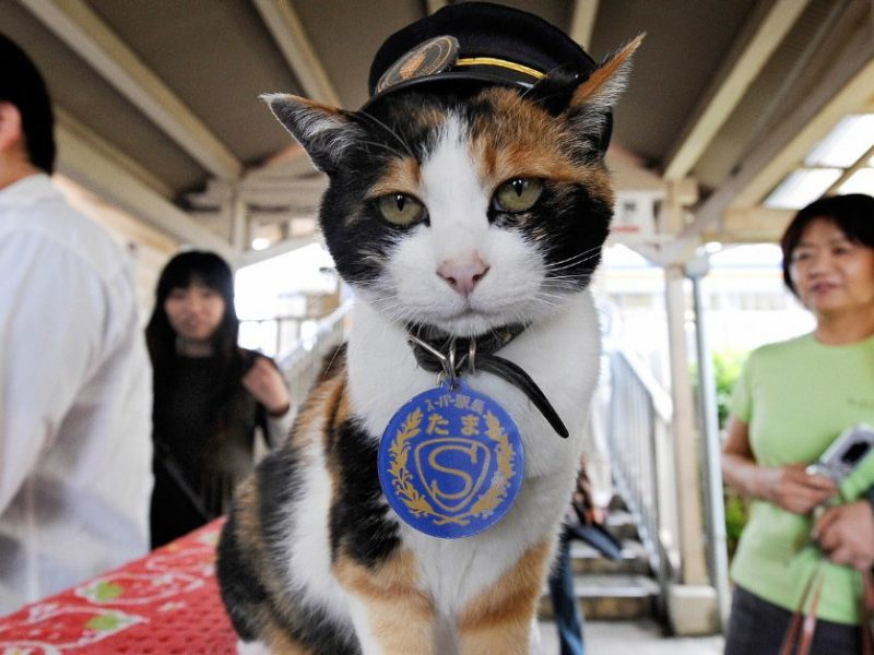 The Stray Cat Who Saved A Railway Line
