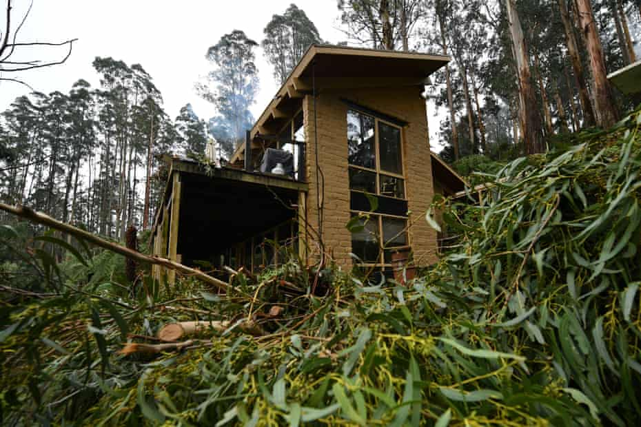 Downed trees are seen at the Masquerade Airbnb in Olinda.