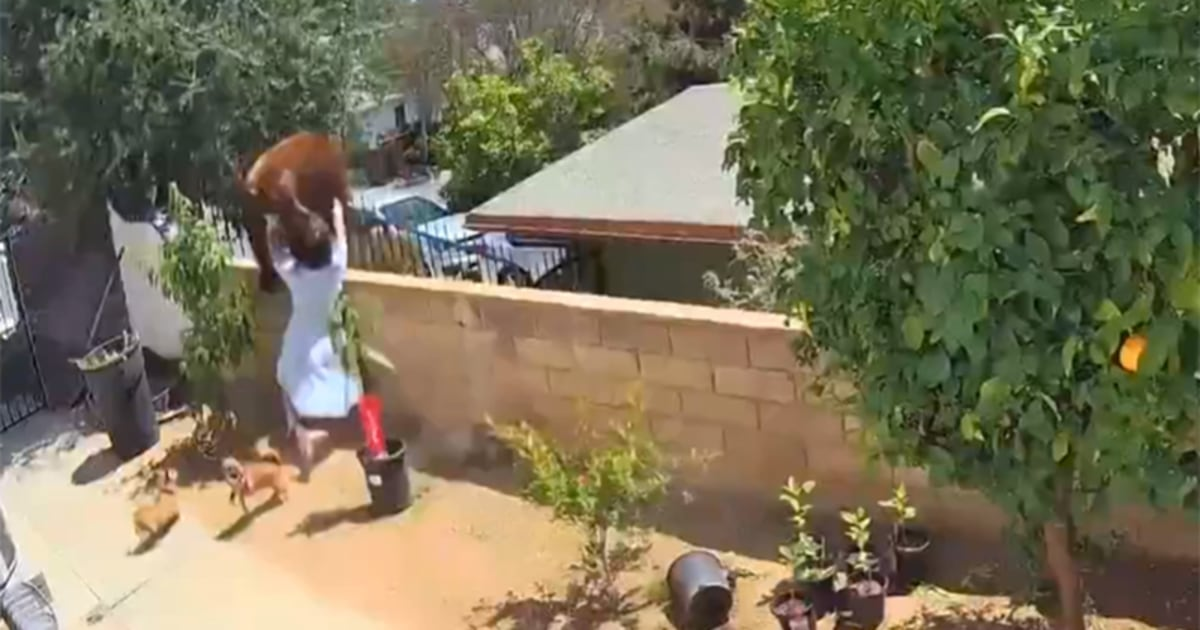 Southern California teen shoves bear off wall to protect dogs in back yard
