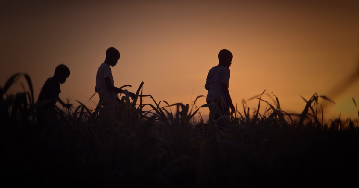 Dominican Republic's enduring history of racism against Haitians explored in 'Stateless'
