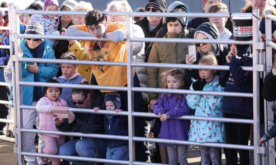 Crowds have gathered to watch Toa in its makeshift pen in Plimmerton.
