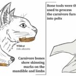 Diagram of bones found and how the tools would be used