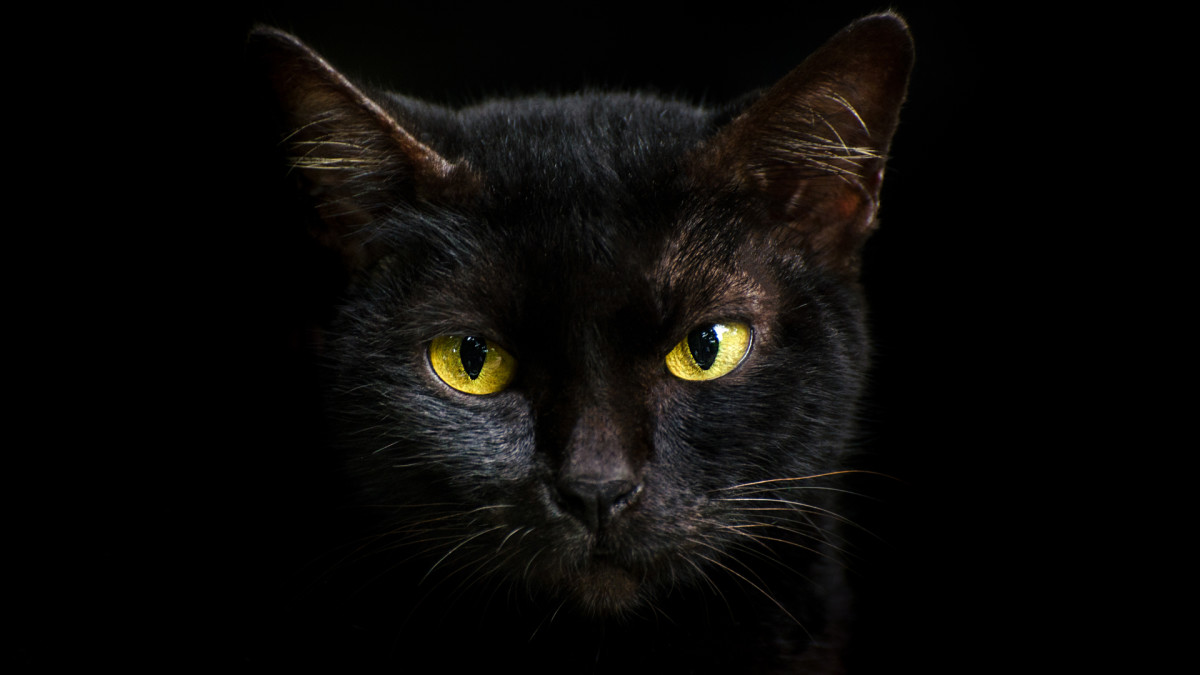 Why Black Cats Are Associated With Halloween and Bad Luck