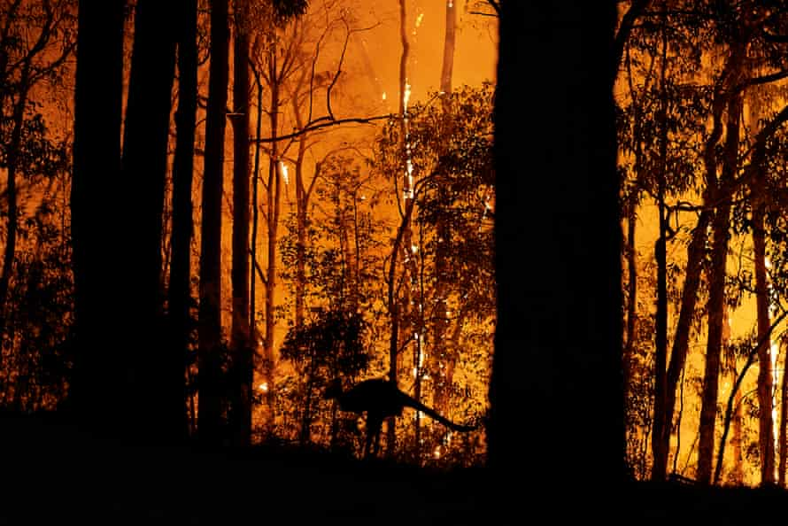 A kangaroo escapes the flames as the fire front approaches a property in November 2019 in Colo Heights, NSW.